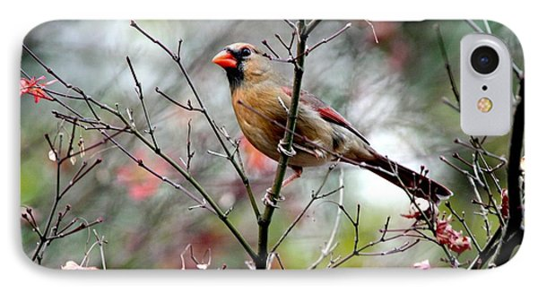 Alert - Northern Cardinal IPhone Case