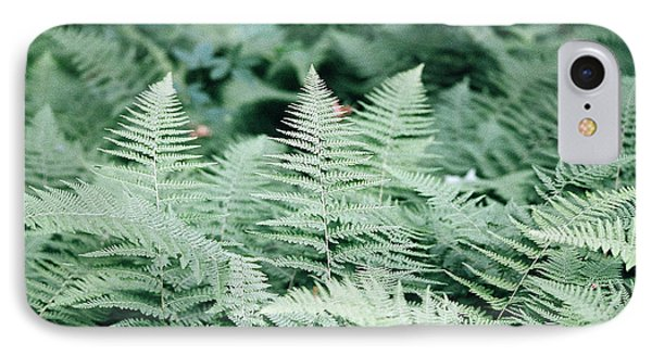 IPhone Case featuring the photograph Algonquin Ferns by David Porteus