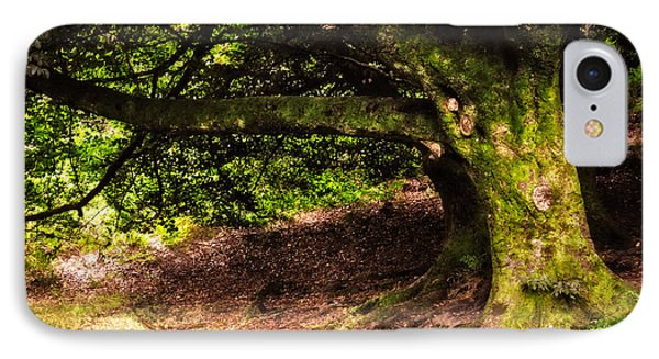 Alive Memory Of Thetrees. Glendalough. Ireland Phone Case by Jenny Rainbow