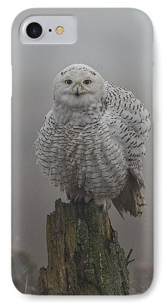 All Fluffed Up IPhone Case by Daniel Behm