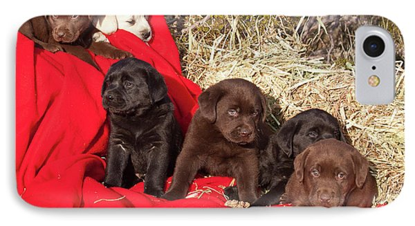 All Three Colors Of Labrador Retriever IPhone Case