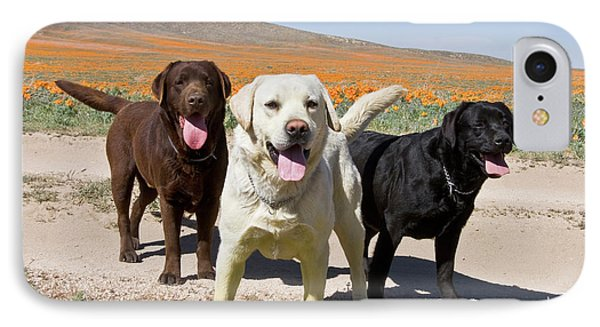 All Three Colors Of Labrador Retrievers IPhone Case