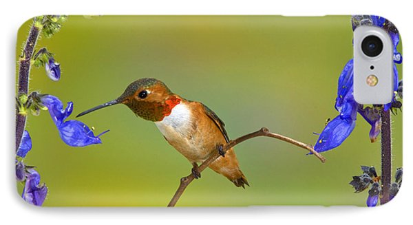 Allens Hummingbird Phone Case by Anthony Mercieca