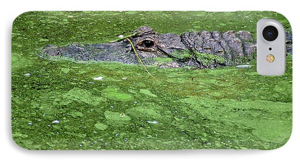 Alligator In Swamp Phone Case by Aimee L Maher Photography and Art Visit ALMGallerydotcom