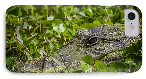 IPhone Case featuring the photograph Alligator Taken At Brazos Bend by Zoe Ferrie