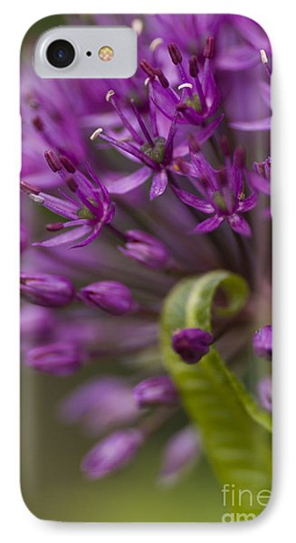 Allium Curl Phone Case by Anne Gilbert