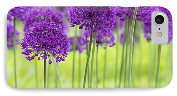 Allium Hollandicum Purple Sensation Flowers Phone Case by Tim Gainey