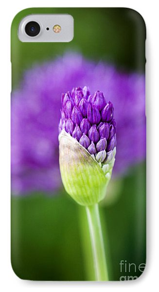 Allium Hollandicum Purple Sensation IPhone Case by Tim Gainey