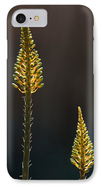 Aloe Plant IPhone Case by Tam Ryan