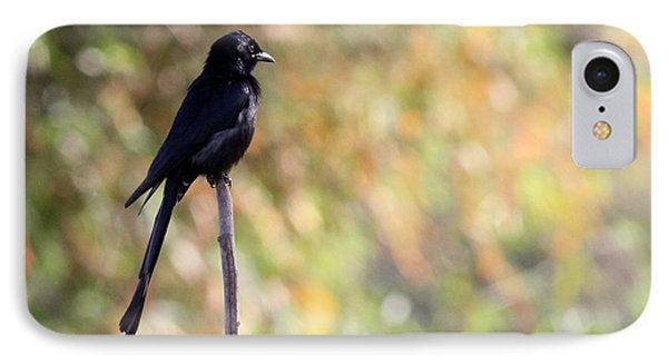 IPhone Case featuring the photograph Alone - Black Drongo  by Ramabhadran Thirupattur
