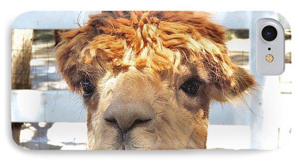 Alpaca Bed Head IPhone Case by Helen Carson