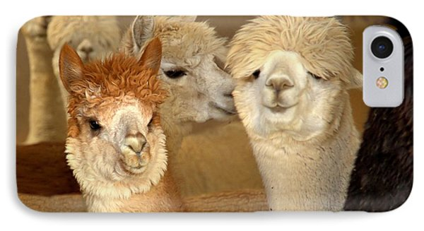 Alpaca Greeting IPhone Case
