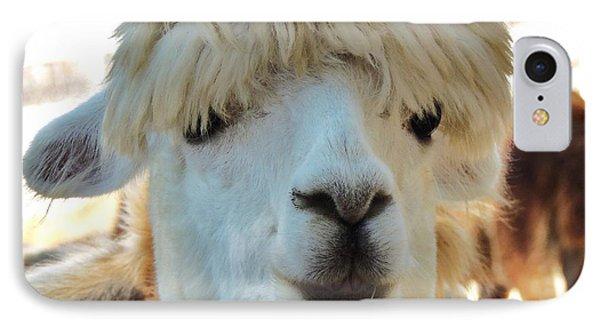 Alpaca Hair Do IPhone Case by Helen Carson