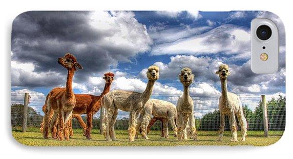 Alpacas IPhone Case by John Loreaux