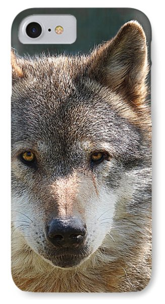 Alpha Male Wolf - I'm Watching You IPhone Case by Gill Billington
