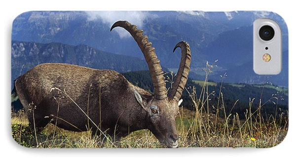 Alpin Ibex Male Grazing Phone Case by Konrad Wothe