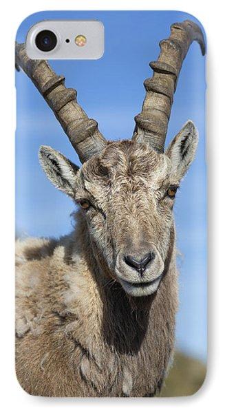 Alpine Ibex  In The Swiss Alps IPhone Case