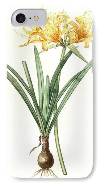 Amaryllis Aurea, Lycoris Aurea Amaryllis Dorée Golden IPhone Case