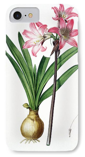 Amaryllis Belladonna From Les Liliacees Engraved By De Gouy IPhone Case by Pierre Joseph Redoute