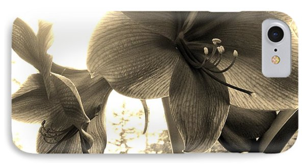 IPhone Case featuring the photograph Amaryllis In Bloom by Laura  Wong-Rose