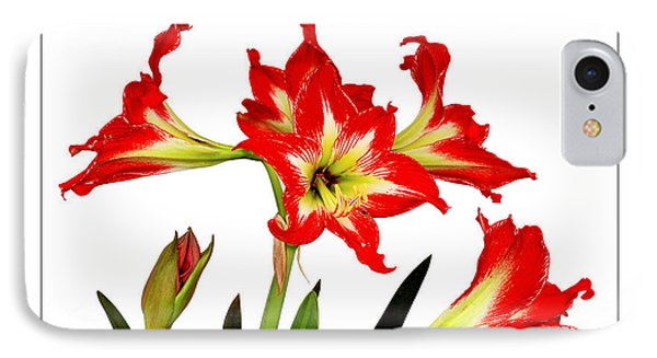 IPhone Case featuring the photograph Amaryllis On White by David Perry Lawrence