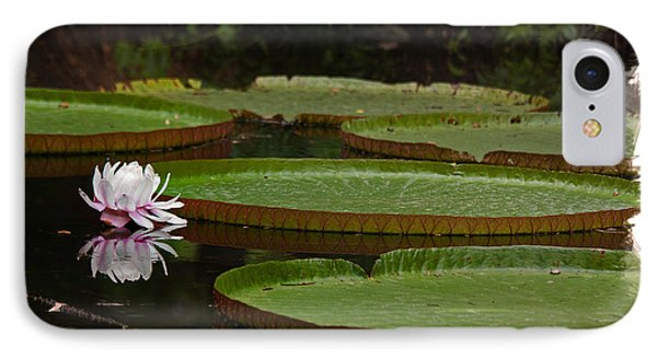IPhone Case featuring the photograph Amazon Lily Pad by Farol Tomson