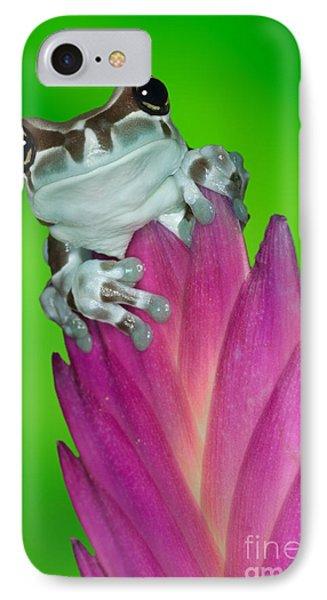Amazon Milk Frog Trachycephalus Phone Case by Dennis Flaherty
