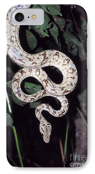 Boa Constrictor iPhone 7 Case - Amazon Tree Boa by James Brunker