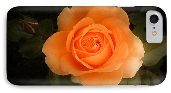Amber Flush Rose IPhone Case