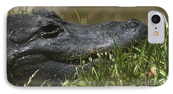 American Alligator Closeup IPhone Case by David Millenheft