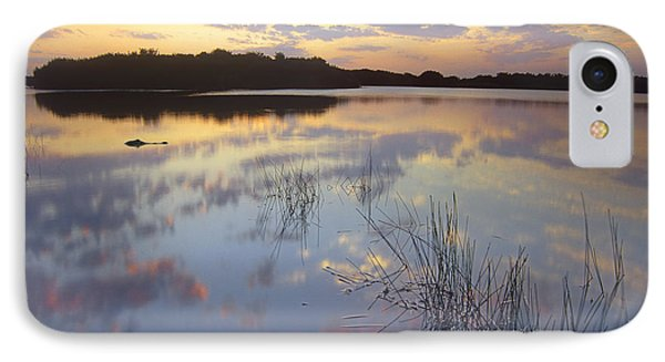 American Alligator Everglades Np Florida IPhone Case by Tim Fitzharris