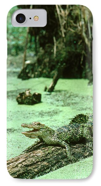 American Alligator IPhone 7 Case by Gregory G. Dimijian, M.D.