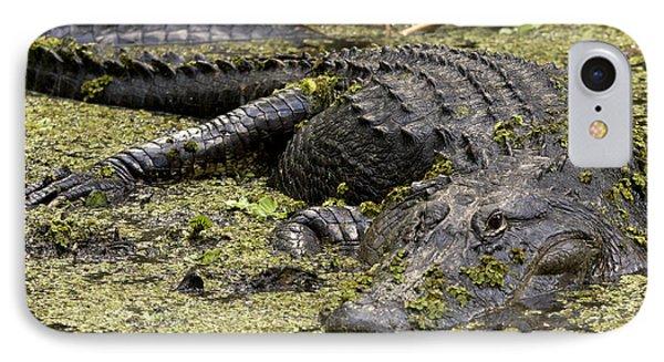 American Alligator Smile IPhone Case