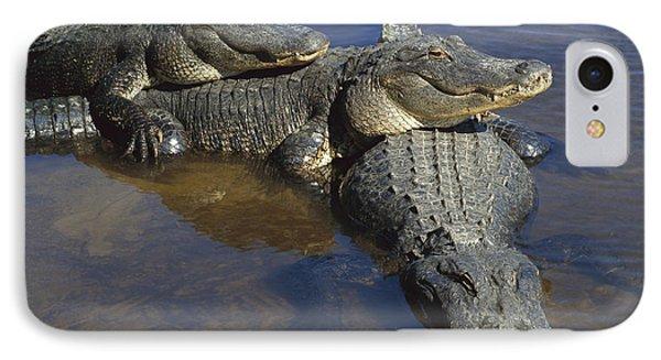 American Alligators In Shallows Florida IPhone Case by Heidi & Hans-Juergen Koch