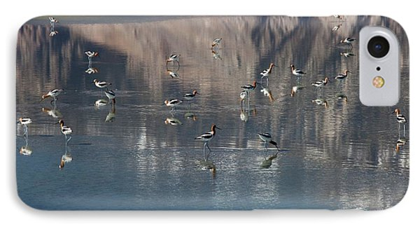 American Avocets On Owens Lake IPhone Case by Jim West