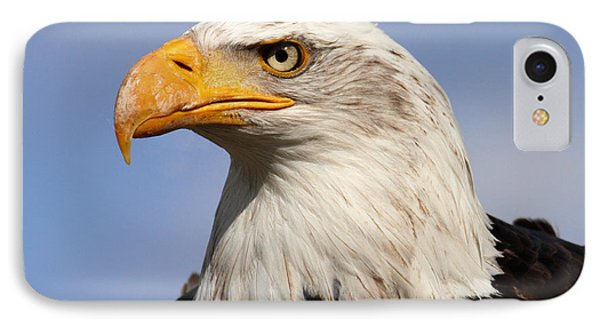 IPhone Case featuring the photograph American Bald Eagle by Nick  Biemans