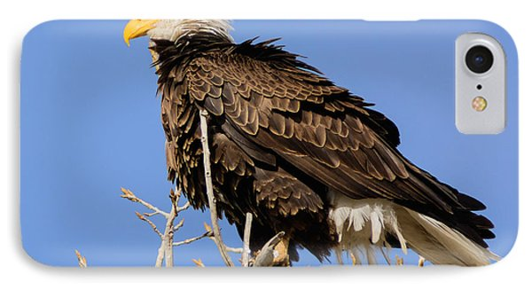 American Bald Eagle Standing Proud IPhone Case by Stephen  Johnson