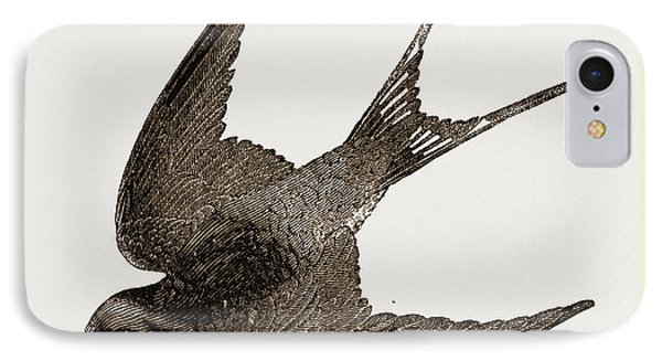American Barn-swallow IPhone Case by Litz Collection
