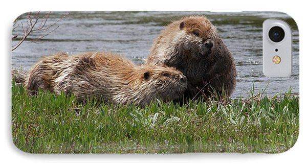American Beaver Pair IPhone 7 Case