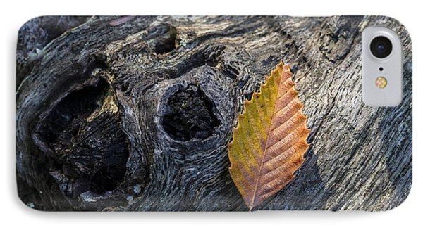 IPhone Case featuring the photograph American Beech Leaf by Andrew Pacheco