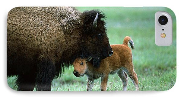 American Bison And Calf Yellowstone Np Phone Case by Suzi Eszterhas