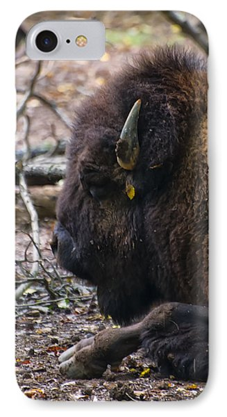 american Bison IPhone Case by Chris Flees