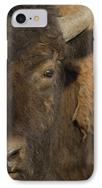 American Bison  Male Wyoming Phone Case by Pete Oxford