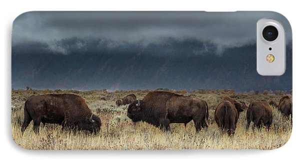 American Bison On The Prairie IPhone Case