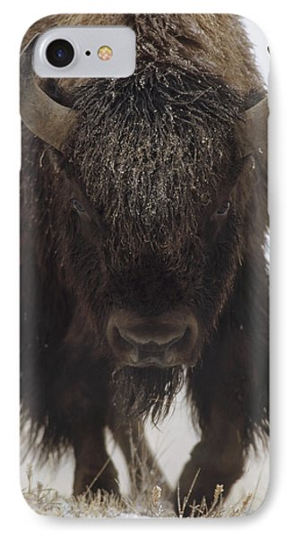 American Bison Portrait Phone Case by Tim Fitzharris