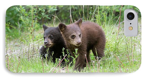 American Black Bear Cubs IPhone Case by Dr P. Marazzi