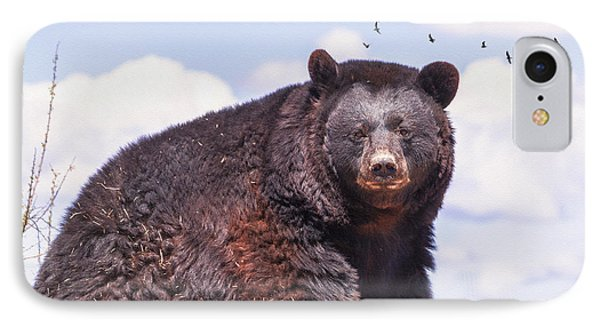 American Black Bear IPhone Case