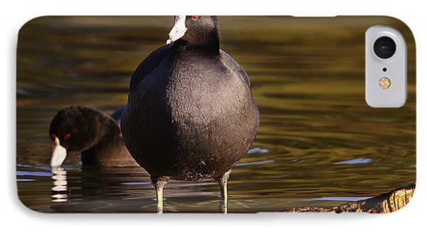 IPhone Case featuring the photograph American Coot  by Brian Cross