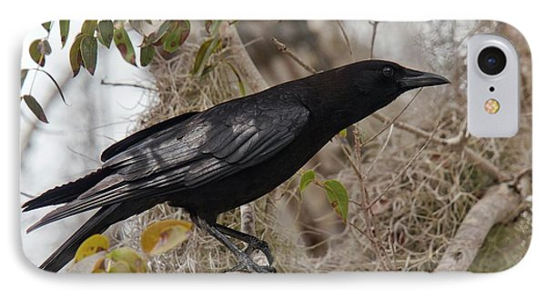 American Crow In A Tree IPhone Case by Bob Gibbons