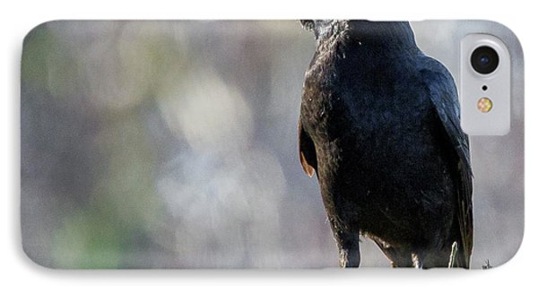 American Crow Square IPhone Case by Bill Wakeley
